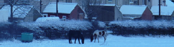 Screenshot of snow covered field at Office Row, Eldon with Horses grazing